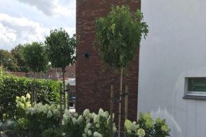 Bomen met bloemen